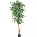 silk-tree