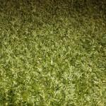 Green-Shag-Carpet-Images